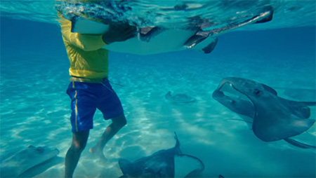 Cayman-Islands-Find-your-Caymankind-swimming-with-stingrays- small