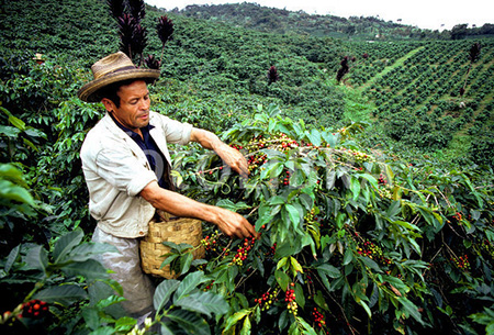 Colombia-Cultural-Coffee-Landscape-small