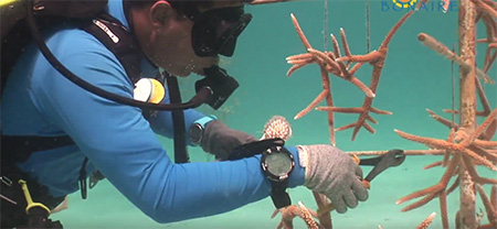 Bonaire-Fabien-Cousteau-Visits-the-Bonaire-Coral-Restoration-Program-small