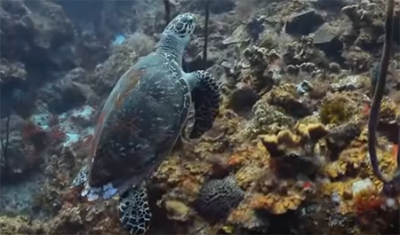 Cayman-Islands-Diving-small