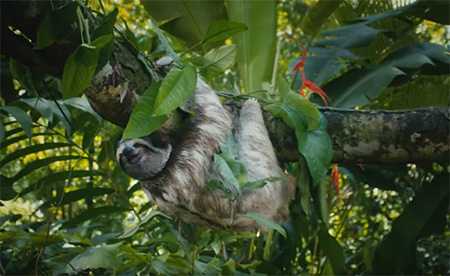 Costa-Rica-Save-the-Americans-Costa-Rican-Animals-for-the-Overworked-small