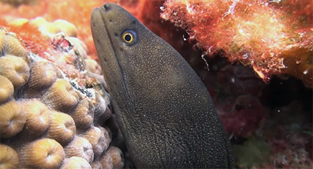 Grenada-Diving-in-Carriacou-Part-1-small
