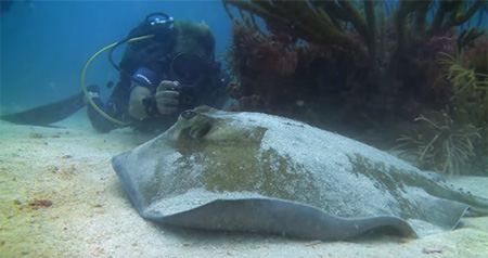Grenada-Diving-in-Carriacou-Part-2-small