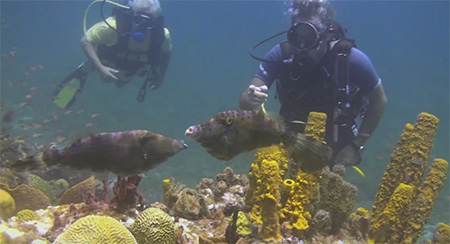 Grenada-Diving-in-Carriacou-Part-5-small