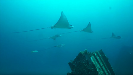Grenada-Pure-Diving-Out-of-this-World-small
