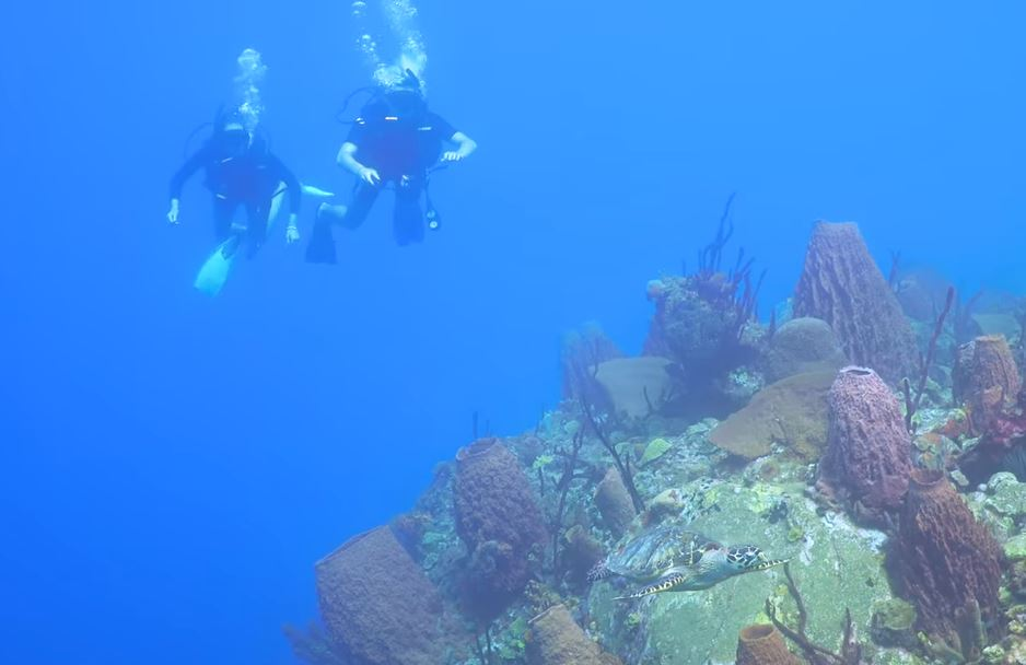 Diving Witchs point (Part 2) with DiveDominica