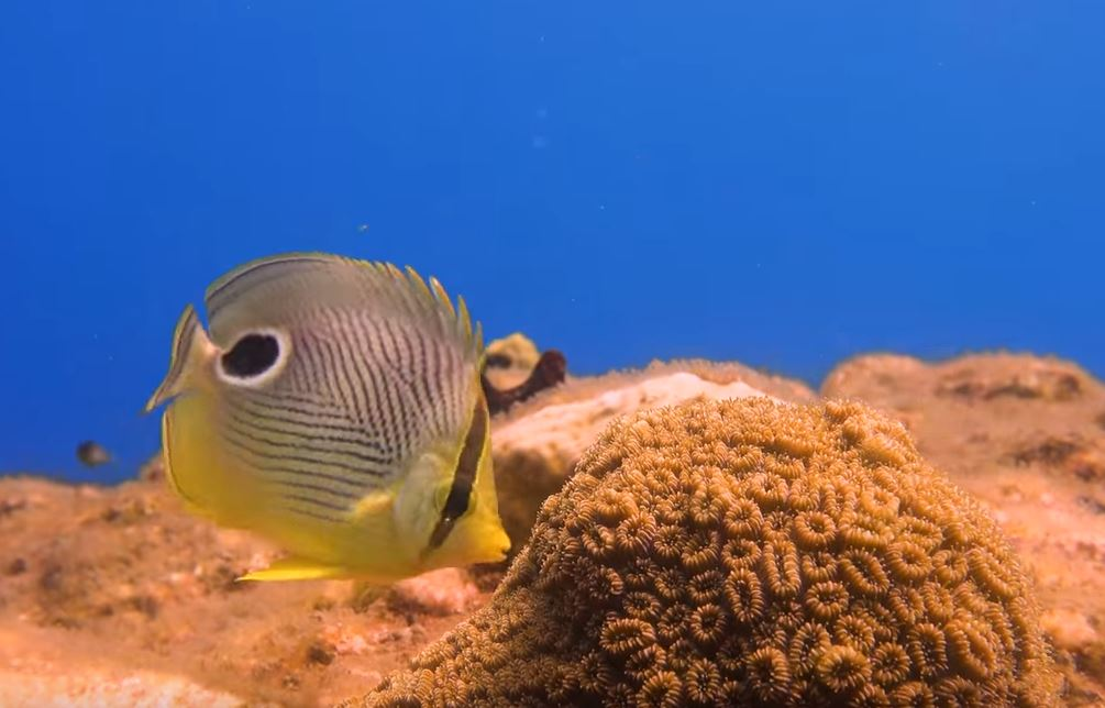 Dominica diving